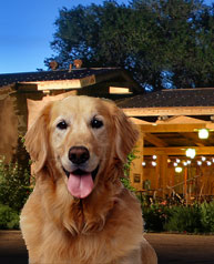 Pet Friendly Sedona Hotel - Boomer - a Rescue Pet